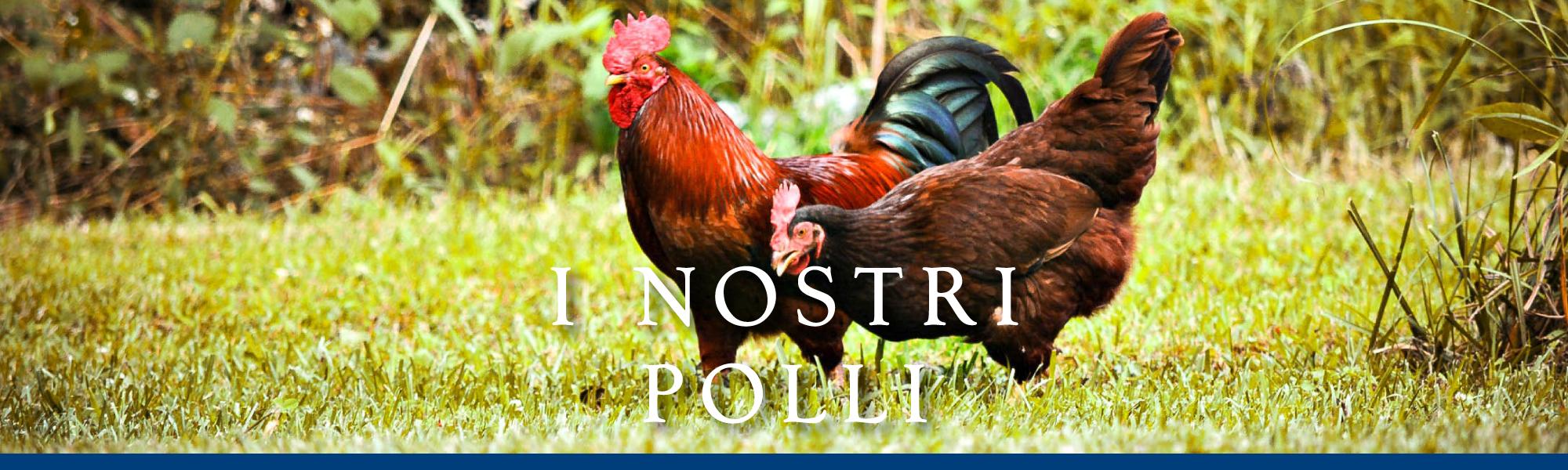 banner-i-nostri-polli